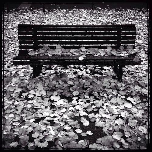 Autumn Colors Blackandwhite Bw Berlin