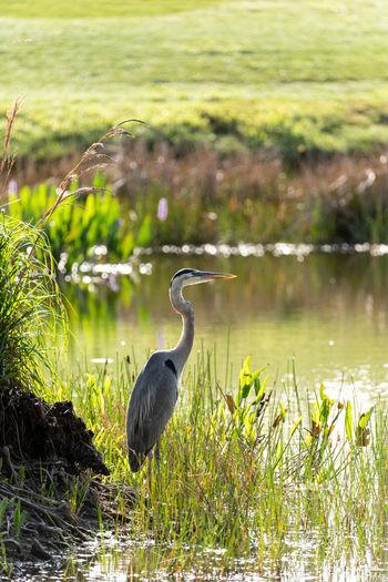 High angle view of heron on lake