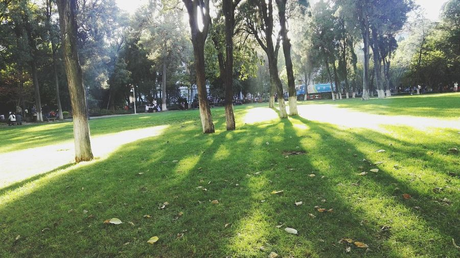 Tree Green Color Growth Grass Nature Sunlight Shadow Beauty In Nature Day Tree Outdoors Green Color Growth Grass Nature Sunlight Shadow Beauty In Nature Day Tree Green Color Growth Grass Nature Sunlight