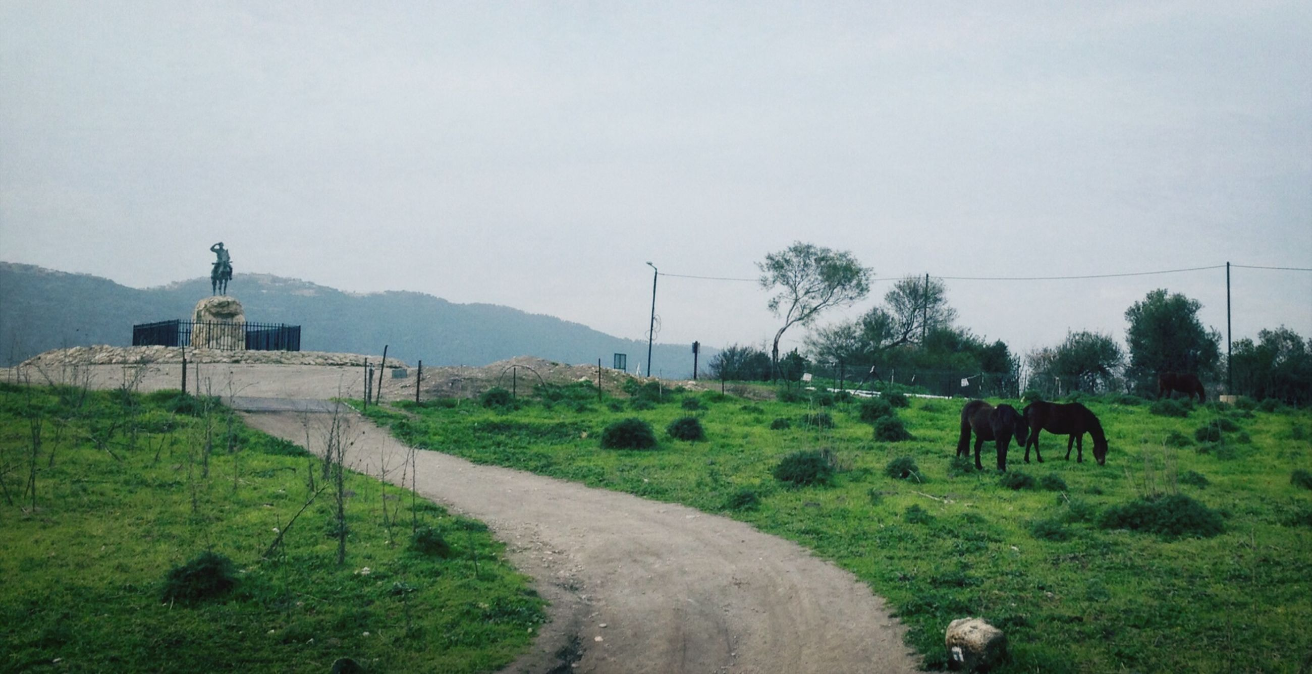 animal themes, domestic animals, mammal, grass, livestock, landscape, field, horse, sky, cow, tree, nature, road, grazing, mountain, built structure, tranquility, green color, country road, clear sky