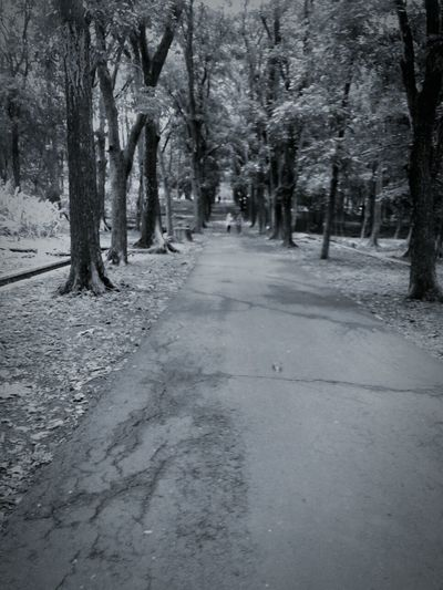 Blackandwhite Photography Black Scenery Tree Eyemphotography Cold Day INDONESIA Malang Photography Photoshoot Photo Day