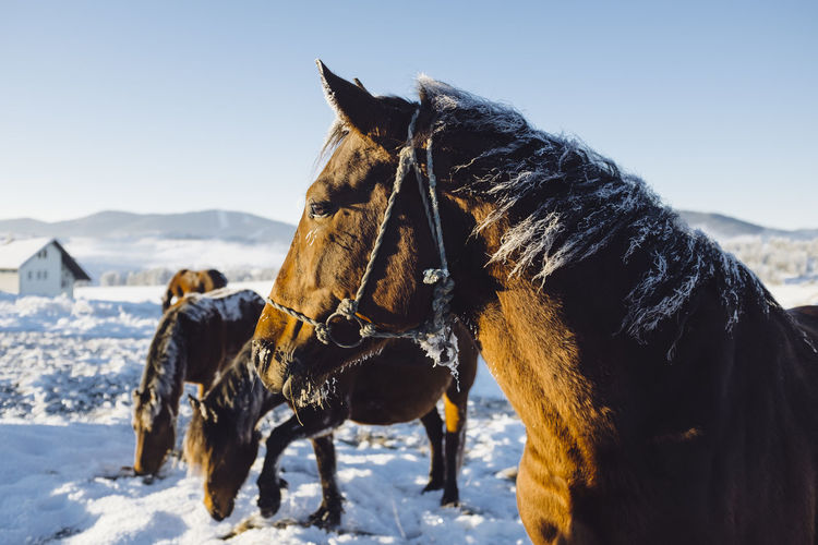 Wild horses Animal Themes Beauty In Nature Cold Temperature Day Domestic Animals Horse Mammal Mountain Nature No People Outdoors Serbia Sky Snow Winter
