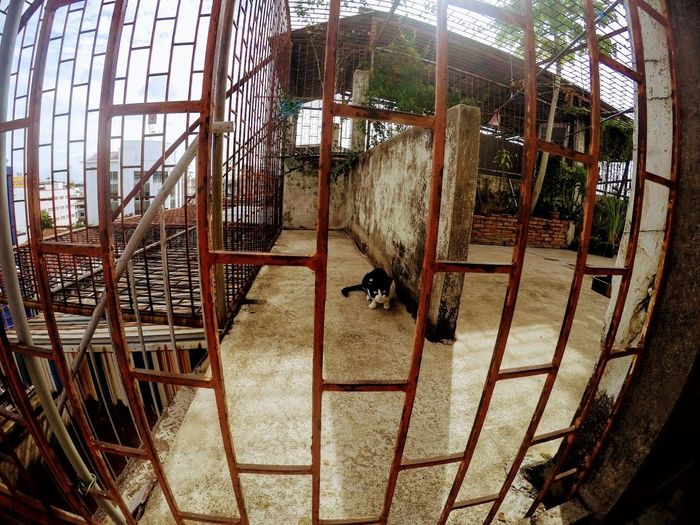 Animal Themes Bangkok, Thailand Bird Cage Cat Day Domestic Animals Framed By Fence Rails Hostel Roof Indoors  Livestock Mammal Metal No People Rooftop Garden