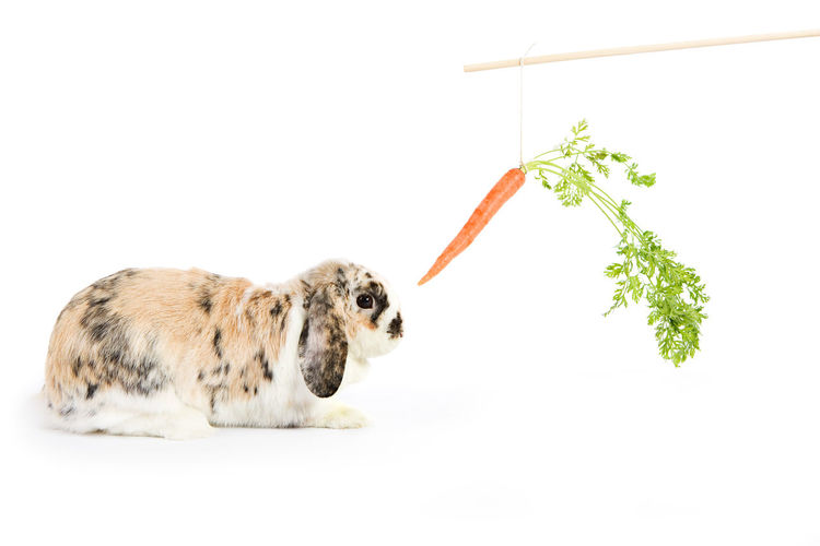 Image series with a rabbit and some with easter eggs. Animal Themes Bunny  Carrot Domestic Animals Food Inspiration No People Rabbit Studio Shot White Background