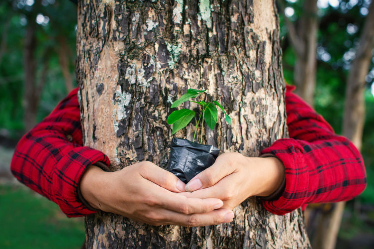 Close-Up Of Woman Holding Potted Plant By Tree
