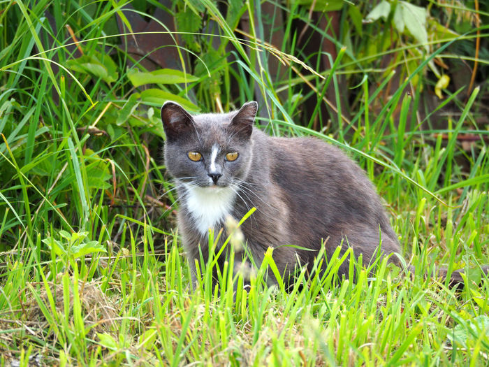 Cat looking away while on grassy field