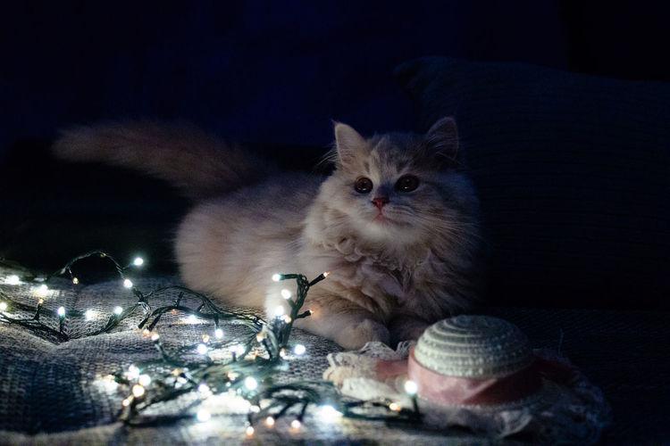 Cat in illuminated room