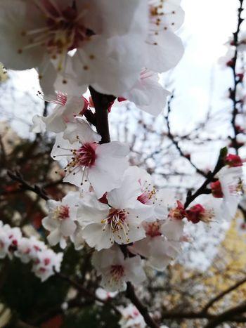 White Background Love Nature EyeEm Best Shots Water Flower Red Sky Springtime EyeEm Best Shots
