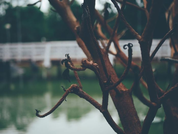 Close-up of tree against lake