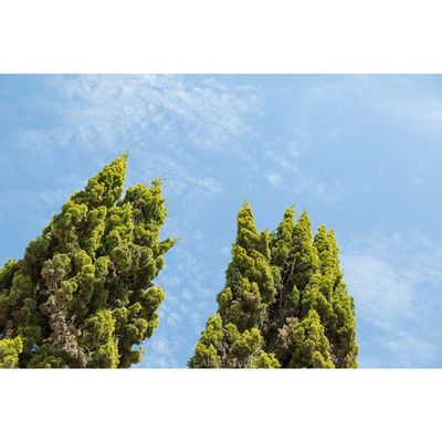 Green Giants Eabreumexico Chapala Jalisco Residency photography artist mexico mexico2014