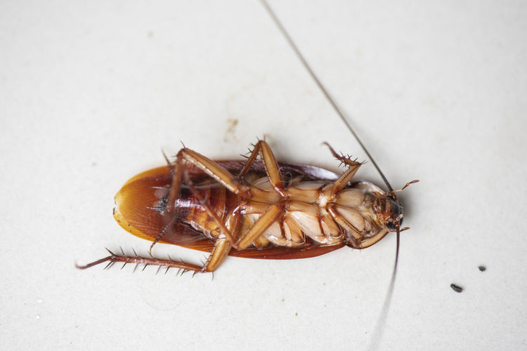 High angle view of insect on floor
