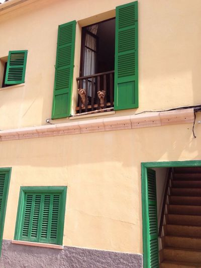 Architecture Window Building Exterior No People Outdoors Day Pet Portraits Colonia De Sant Jordi Mallorca Green Holiday Enjoying Life Pet Dog Dogs Of EyeEm Paint The Town Yellow