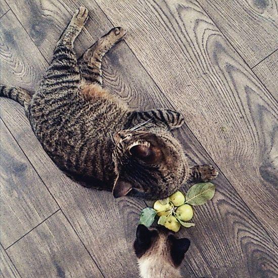 Котик яблоки