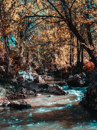 Fall vibes Teal And Orange Fall Vibes Fall Water Nature Tree No People Day Beauty In Nature Sea Land Outdoors Motion Plant Branch Scenics - Nature Wave Tranquility Beach Sunlight Waterfront Full Frame Flowing Water