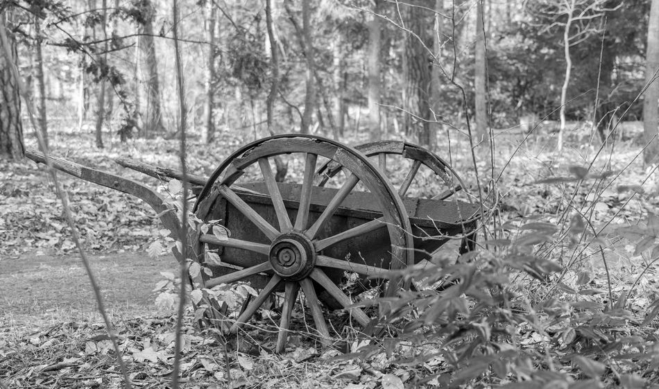 Berlin Berlin Photography Berliner Ansichten Black And White Blackandwhite Cemetery Cemetery Photography Cemetery_shots Daytime Graveyard Graveyard Beauty No People Outdoor Photography Outdoors Schwarzweiß Wagon Wheel Wheel Wood - Material