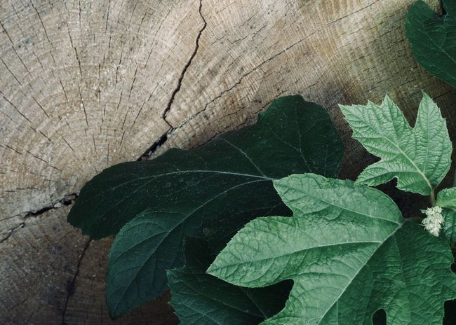 Wood and Leaf Copy Space Nature Wood Backgrounds Bark Beauty In Nature Close-up Concept Directly Above Focus On Foreground Green Color Growth High Angle View Leaf Leaf Vein Leaves Natural Pattern Nature Outdoors Plant Textured  Tree Wood - Material