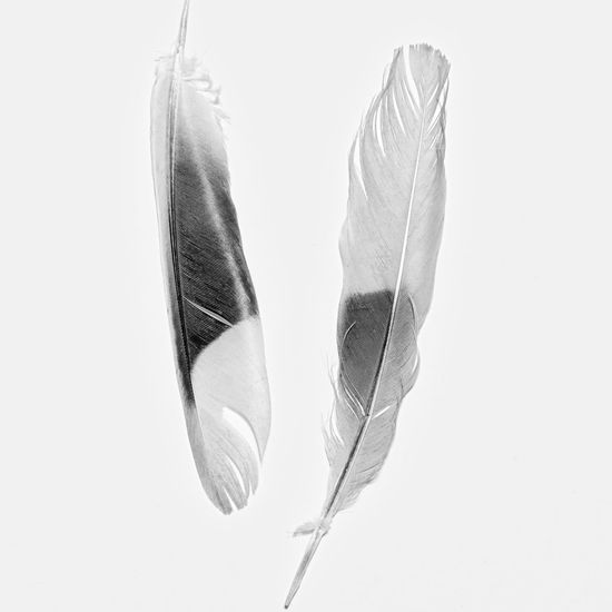 Feathers in