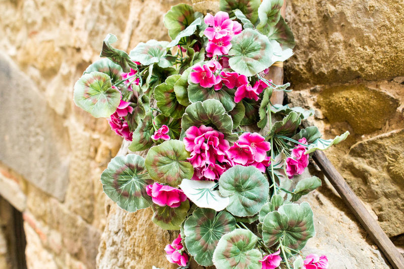 Nature Plants Summer Italy Tuscany Flower Flowering Plant Plant Pink Color Beauty In Nature Freshness Vulnerability  Fragility Close-up Stone Wall Day Wall - Building Feature No People Flower Head Growth Solid Focus On Foreground Wall Petal Outdoors Flower Arrangement Bouquet Bunch Of Flowers Flower Pot