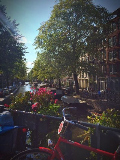 Beautiful day! Your Amsterdam Life City Life Traveling Amsterdam Summer Cityscapes