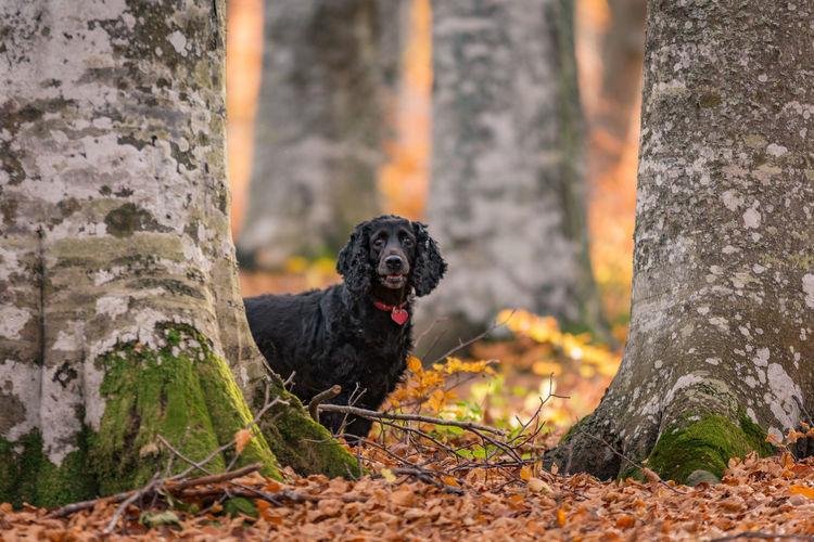 Black dog sitting on tree trunk