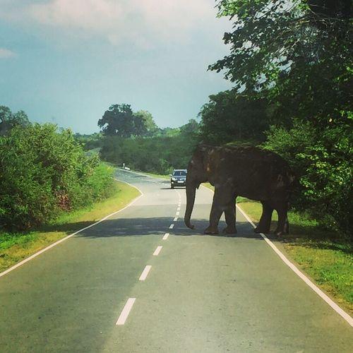 Sri Lanka Elephant Road