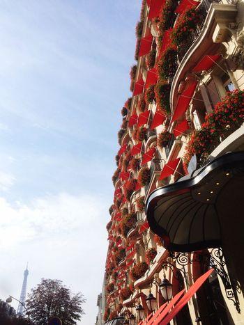 Paris La Tour Effel Automne Autumn Architecture Flowers Les Fleurs Tres Belles