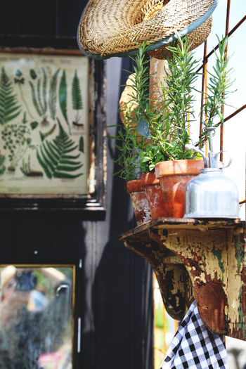 Close-up Day Focus On Foreground Green Color Growth No People Part Of Plant Potted Plant Herb Herbs Rosemary Rosemary Herb Pots Idyllic Idyllic Arrangement Still Life StillLifePhotography Shelf Vintage Style Tranquil Scene Interior Design Interior Country Life