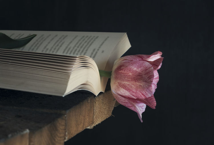 Close-up of pink flower and book on table against black background