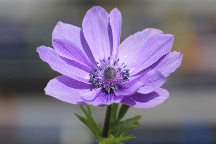 🌸 Flower