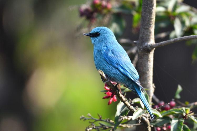 Birds Tree Bird