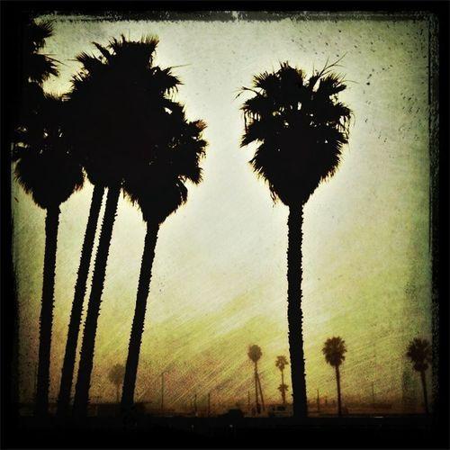 Santa Monica Fog