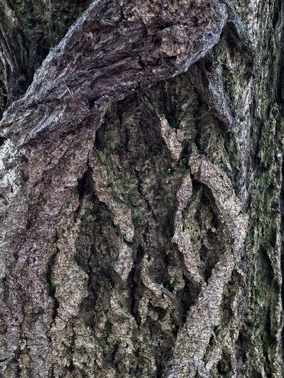 Nature Trees Bark Beautiful Bark