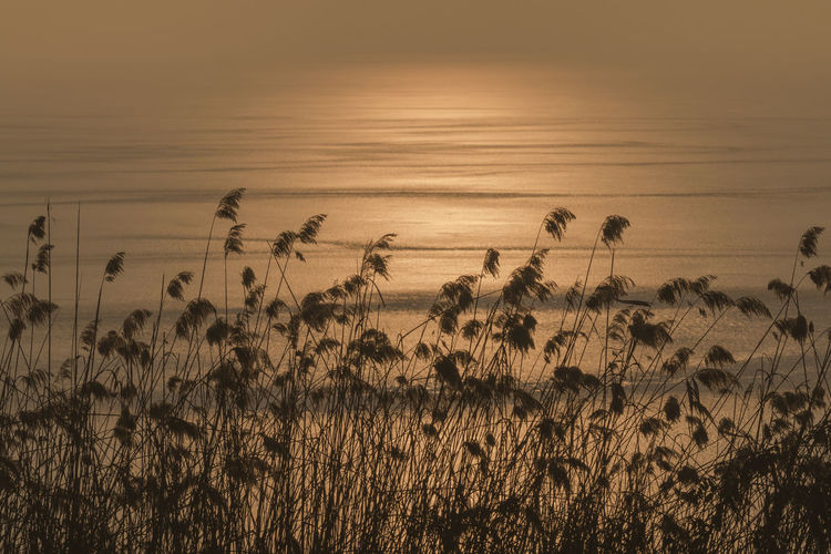 Sunrise at the lake Beauty In Nature Gold Golden Lake Lake View Lakeside Landscape Landscape_Collection Landscape_photography Landscapes Nature Nature Photography Nature_collection Scenics Sunrise Sunrise_Collection Sunrise_sunsets_aroundworld Tranquil Scene Tranquility