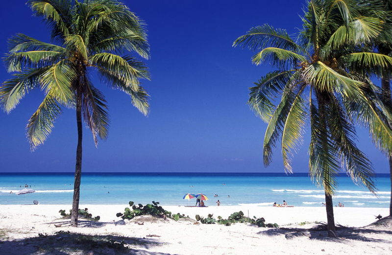 Beach Coastline Holiday Horizon Over Water Incidental People Large Group Of People Mixed Age Range Palm Tree Relaxation Sand Sea Shore Summer Tourist Tropical Climate Vacations Water Weekend Activities