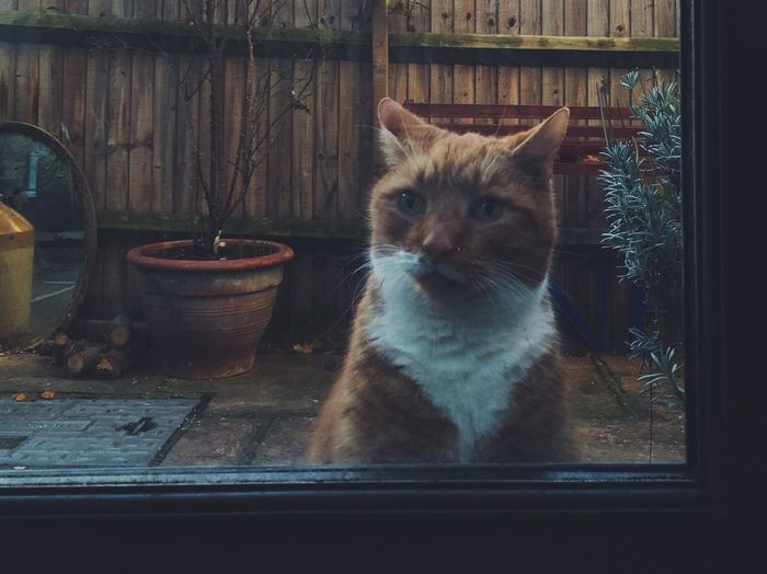 Let me in! Domestic Cat One Animal Domestic Animals Feline No People Sitting Waiting Outside