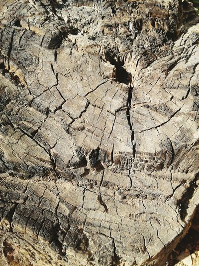 Tree stump Full Frame Backgrounds Textured  Pattern Cracked Day No People Close-up Outdoors Nature Tree Trunk Tree Stump Photographylovers Eyeemnaturephotography Eyeemindia Photoaroundyou Low Angle View EyeEmBestPics Eye4photography  EyeEm Nature