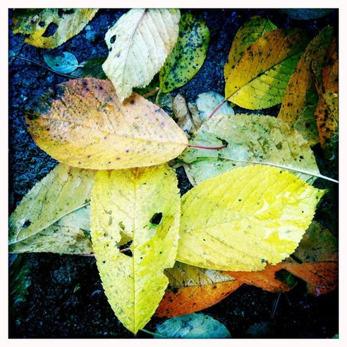 Autumn leaves / Herbstlaub Macro Germany Leaves Flowers Blätter Laub Gelb Transfer Print Leaf Plant Part Auto Post Production Filter Yellow Autumn No People Beauty In Nature Close-up Plant Nature Directly Above Outdoors