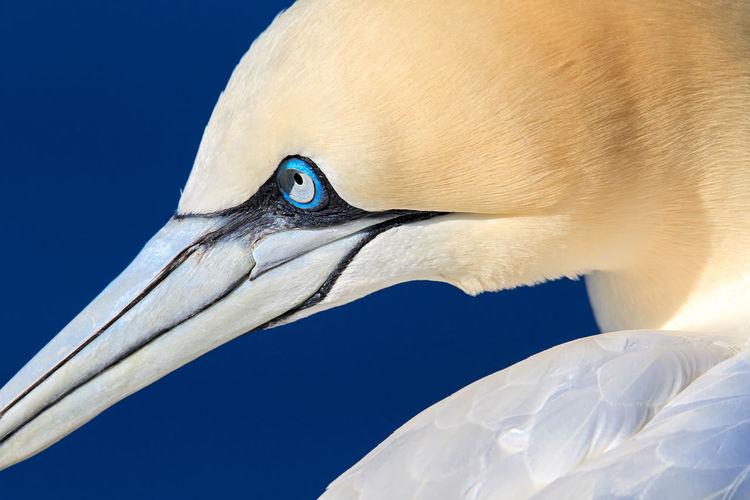 Bird against clear blue sky