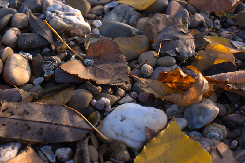 Autumn Herbst Muscheln Mussels Natur Nature Shore Steine Stones Ufer камушки осень Природа ракушки речной берег