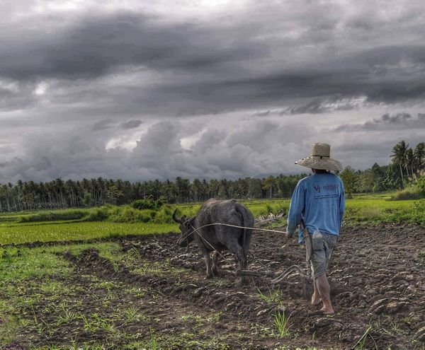 Cultivate. Wisdom Above Thoughts Eyeem Philippines Snapshots Of Life Hdr Edit Country Life Farmland Inspire And Be Inspired✨ Faith Life In Mindoro Notes From Underground Portrait Goodnight EyeEm