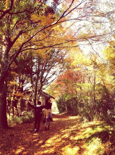 With Friends at 妙見山 Autumn Leaves