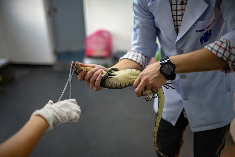 Cropped hand of doctor examining lizard held by man in hospital