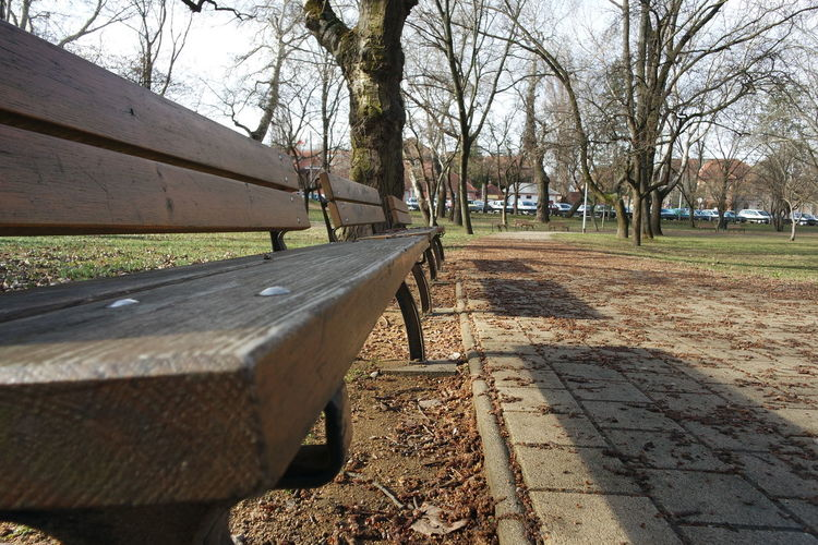 Little morning walk in the park Bench Day Hungary March Morning Morning Light Nature No People Outdoors Park Spring Sunlight Tree