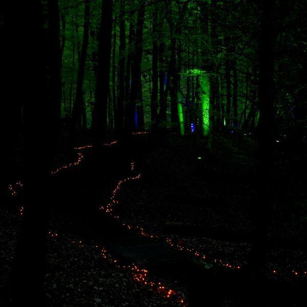 Wildwald Vosswinkel Night Lights Nofilter Forestlights Waldlichter Night