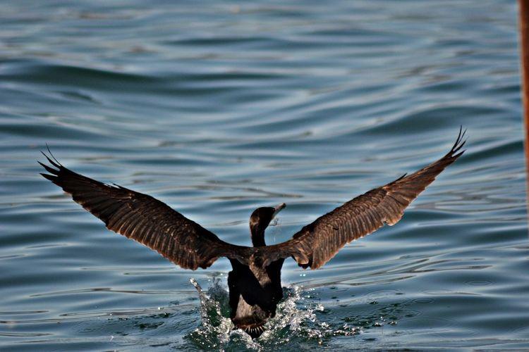 EyeEm Birds Lago Maggiore