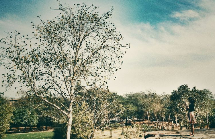 Qutub Complex Nature Photography Rookiephotographer Snapseed Editing