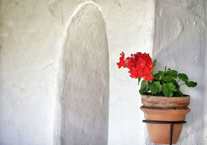 Wall - Building Feature Red Close-up Architecture Flower Pot Weathered Spanish Arquitecture Red Geranium Geranium Arched Doorway