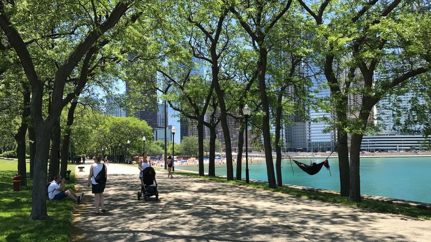Hammock Chill Summer Chicago Tree Day Full Length Outdoors People Nature Building Exterior Architecture Men Adult City Adults Only Sky People Taking Photos