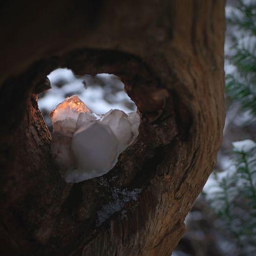 Geheimnisvolles Leuchten 24mm F1.4 Close Up Fujinon 16mm F1.4 FujiFilm X20 Advent Dunkle Jahreszeit Wärme Höhle Kerzenlicht Vorweihnachtszeit Geheimnisvoll Leuchtend Kristal Tree Close-up No People Tree Trunk Trunk Nature Plant Focus On Foreground