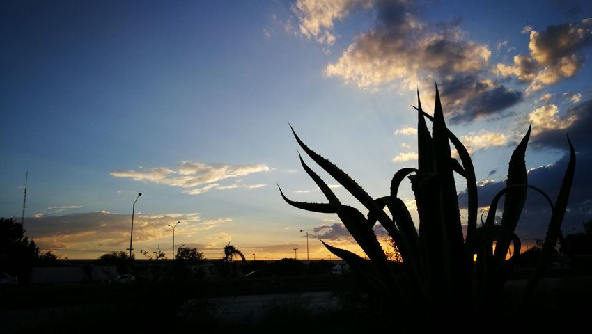 Sunset. Nofilter nofilternoeditNofilters Silhouette Sky Nature HuaweiP9